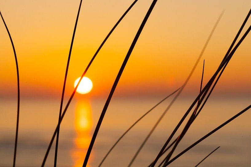 sunset and grass, helmgras en zonsondergang van Arjan van Duijvenboden