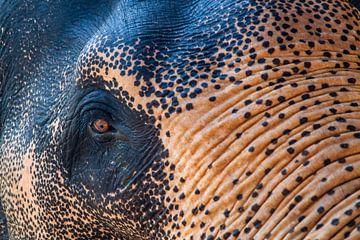 Elefant von Tim van Breukelen