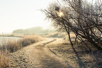 Oostvaardersplassen in de winter van Michel van Kooten