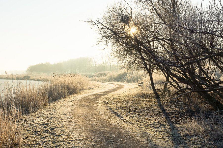 Oostvaardersplassen in de winter