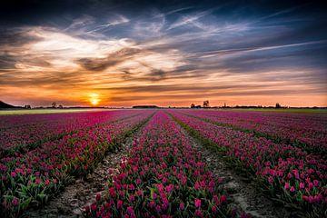 Tulpen uit het Noorden, Oldenzijl