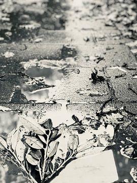 Regen van Kimberly Galjaard
