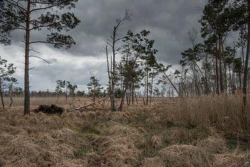 Dubringer Moor in April van Holger Spieker