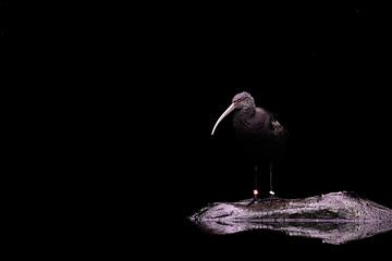 Ruhe in der Dunkelheit von Roberto Geurts-Verga
