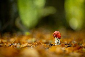 Wachsender Pilz (kleiner Fliegenpilz) von Wouter van Agtmaal