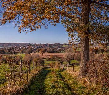 Herfstkleuren bij Epen in het   Zuid-Limburgse Heuvelland van
