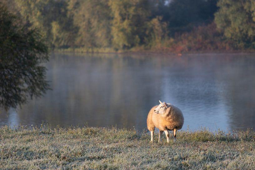 Schafe auf dem Trockenen Land von Tania Perneel