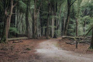 De weg in het Sprielderbos von Jos Erkamp