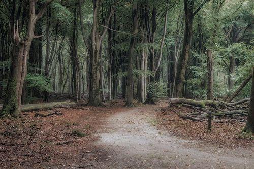 De weg in het Sprielderbos van