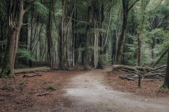 De weg in het Sprielderbos van Jos Erkamp