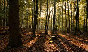Elke boom heeft zijn schaduw