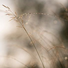 Soft light van Rik Verslype