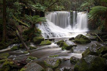 Tropisch regenwoud Tasmanië von Mark de Boer - Artistiek Fotograaf