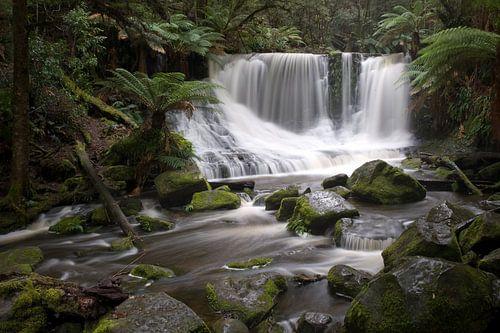 Tropisch regenwoud Tasmanië van