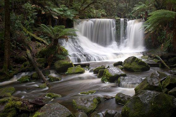 Tropisch regenwoud Tasmanië van Mark de Boer - Artistiek Fotograaf