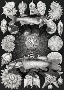 Thalamophora Kammerlinge sur Marja van den Hurk