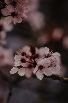 Die Kunst des Blühens von Anouk Strijbos