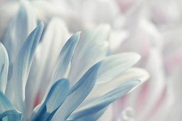 Zarte Blüten von Violetta Honkisz