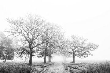 Morgennebel von Niels Barto