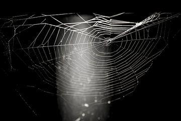 Das Spinnennetz von Norbert Sülzner
