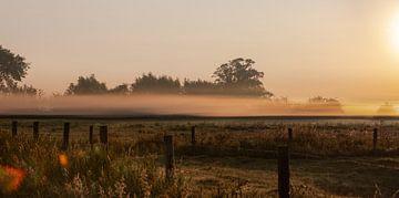 Dauw polder ochtendlicht van Percy's fotografie