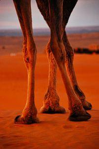 Poten in de Sahara van