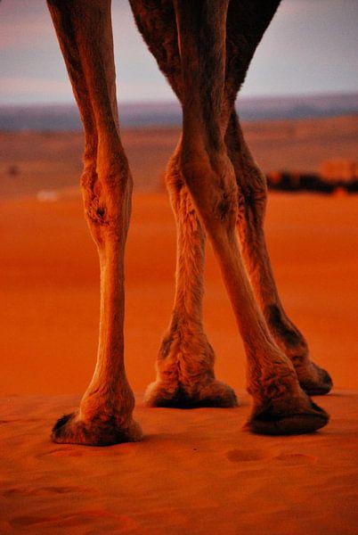 Poten in de Sahara - Marocco van Homemade Photos