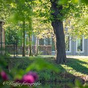 Kuifje-fotografie profielfoto