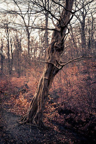 Ein schöner alter Baum in Arnheim von Steven Dijkshoorn