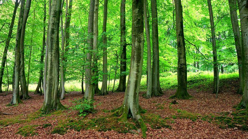 Nationalpark Jasmund von Ostsee Bilder