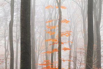 Oranje bladeren in de mist von Dennis van de Water