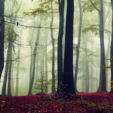 Towering Trees - Buchenwald von Dirk Wüstenhagen