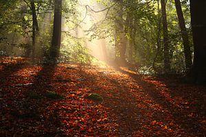 Magisch Sprookjesbos in de Herfst van Maarten Pietersma