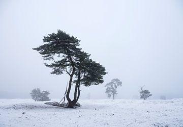 vliegdennen in besneeuwd landschap van anton havelaar