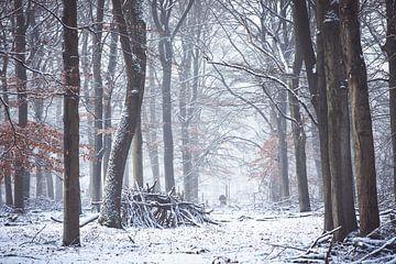 L'hiver sur l'Utrechtse Heuvelrug ! La hutte des branches ! sur Peter Haastrecht, van