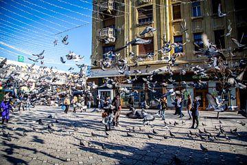 Tauben auf dem Platz von Julian Buijzen