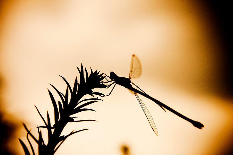 Zonsondergang libelle van Robbie Veldwijk