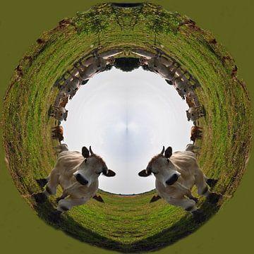 Koeien in een rondje. Blonde d'aquitaine. Groen. sur Greet ten Have-Bloem