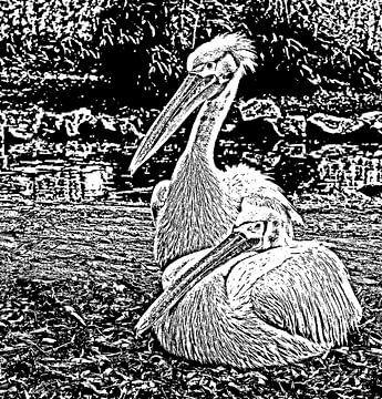 Pelikan-Ätzung. von Jose Lok