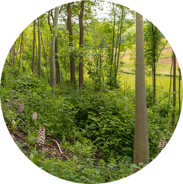 Hakhout met Purperorchis - Gerendal Zuid-Limburg van Mark Meijrink