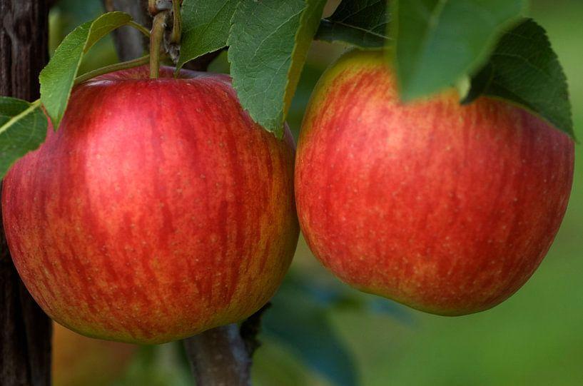 2 appels van George Burggraaff