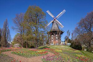 Wallmühle, Windmühle, Mühle, Blumen, Bremen, Deutschland, Europa von Torsten Krüger