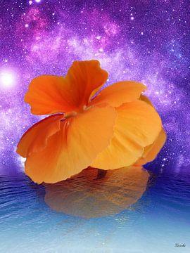 Bloemen ontwaken van Gertrud Scheffler