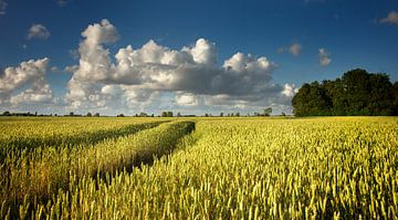 Gouden graan in de zon van Bo Scheeringa Photography