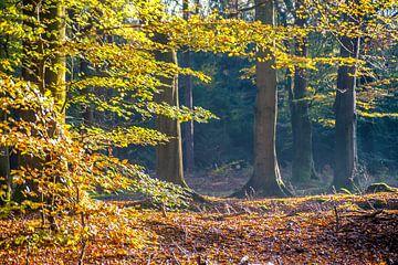 Herfst in het bos 01 von Geertjan Plooijer