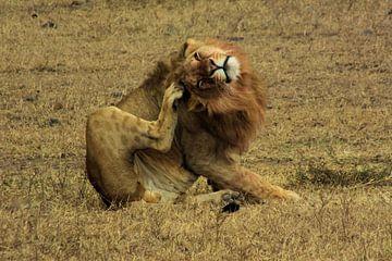 leeuw na de lunch van