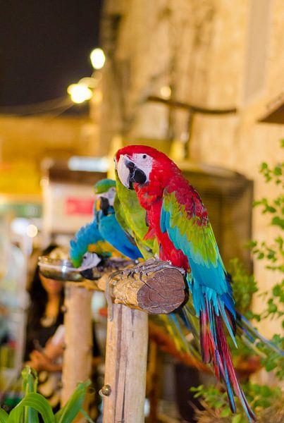 Ara papegaaien in de souk van Doha Qatar van Jack Koning
