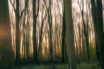 abstracte ochtend in het bos van Tania Perneel