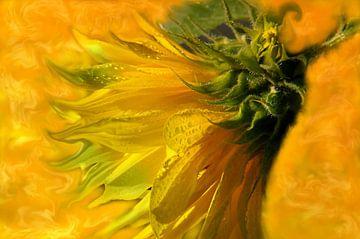 Zonnebloemendag van Vera Laake