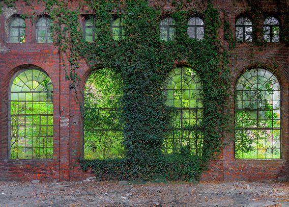 Nostalgische fabrieksvensters met klimop van Jack van der Spoel